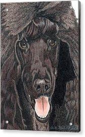 Standard Poodle Vignette Acrylic Print