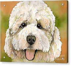 Standard White Poodle Dog Watercolor Acrylic Print by Cherilynn Wood
