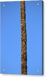 Acrylic Print featuring the photograph Standing Alone by Miroslava Jurcik