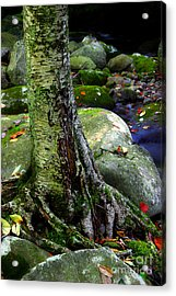 Standing Along The Stream Acrylic Print