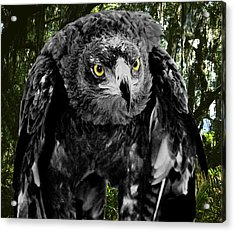 Standing Eagle Acrylic Print by Fred Leavitt