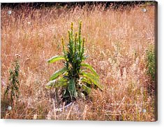 Standing Green Acrylic Print by Michele Richter