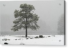 Acrylic Print featuring the photograph Standing In A Snow Storm by Brenda Bostic