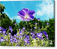 Standing Out In Blue Acrylic Print by Judy Via-Wolff