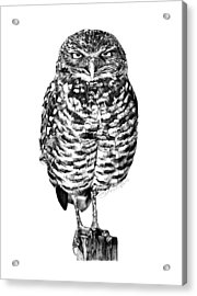 Acrylic Print featuring the drawing 041 - Owl With Attitude by Abbey Noelle