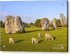 Standing Stones And Sheep Avebury Acrylic Print by Colin and Linda McKie