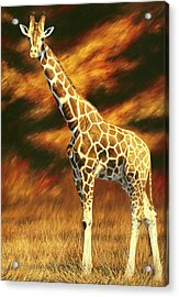 Standing Tall Acrylic Print by Lucie Bilodeau