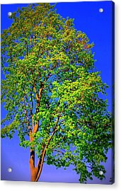 Standing Tall Acrylic Print by Mary Beth Landis
