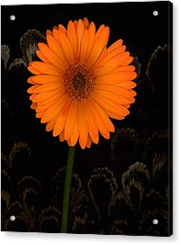 Standing Tall Acrylic Print by Suzanne Gaff