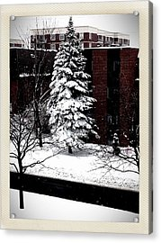 Acrylic Print featuring the photograph Standing Tall by Zinvolle Art