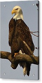 Standing Watch Acrylic Print by Bruce Bley