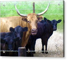 Standout Steer Acrylic Print