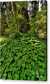 Stanley Park In Spring Time Acrylic Print by Terry Elniski
