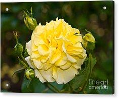 Stanley Park Rose Garden 7 Acrylic Print by Terry Elniski