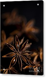 Star Anise Study Acrylic Print by Anne Gilbert