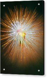 Acrylic Print featuring the photograph Star Bright by Susan D Moody