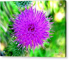 Acrylic Print featuring the photograph Star Burst by Kathy Bassett