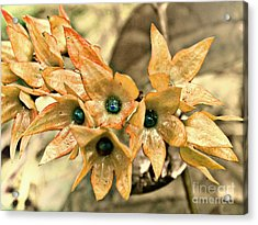 Star Fade Diffused Acrylic Print