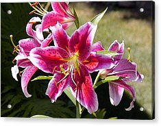 Star Lily In Blazing Color Acrylic Print