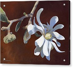 Star Magnolia Acrylic Print