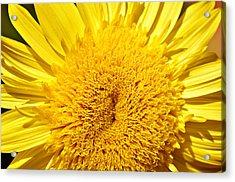 Starburst Lemon Aura Acrylic Print by Julie Palencia