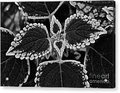 Stardust Petals Acrylic Print