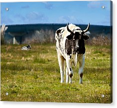Acrylic Print featuring the photograph Stare Down by Jon Exley