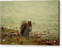 Acrylic Print featuring the photograph Stare Down by Lynn Hopwood