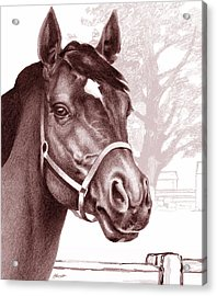 Stare Of The Stallion Acrylic Print by Patricia Howitt