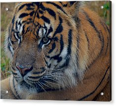 Stare Through Acrylic Print