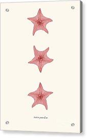 Starfih Pink Sea Vintage Acrylic Print by Patruschka Hetterschij