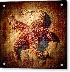 Starfish 3 Acrylic Print by Kathleen Scanlan