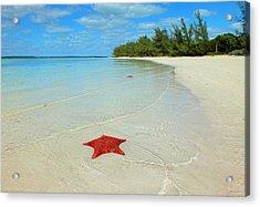 Starfish 5 Of Bottom Harbour Sound Acrylic Print