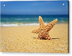 Starfish Acrylic Print by Aged Pixel