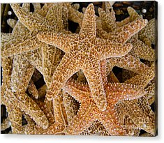Starfish Acrylic Print by Amy Cicconi
