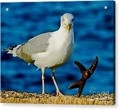 Starfish And Seagull Dance On The Rocks Acrylic Print by Carol F Austin