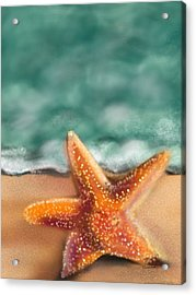 Starfish  Acrylic Print by Christine Fournier