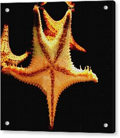 Acrylic Print featuring the photograph Starfish In Mosaic by Janette Boyd