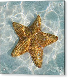 Starfish Acrylic Print by Jon Neidert