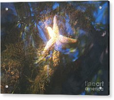 Starfish Acrylic Print by Judy Via-Wolff