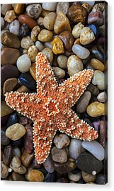 Starfish On Rocks Acrylic Print by Garry Gay