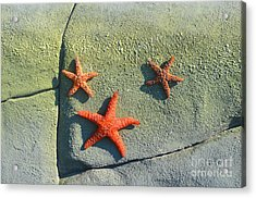 Starfish On The Rocks Acrylic Print by Luther Fine Art
