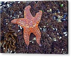 Starfish - Oregon Coastline Acrylic Print by George Bostian