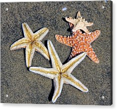 Starfish Acrylic Print by Tammy Espino