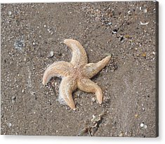 Acrylic Print featuring the photograph Starfish by Tiffany Erdman