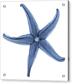 Starfish X-ray Acrylic Print by Gustoimages