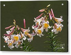 Acrylic Print featuring the photograph Stargazer Lilies by Dale Nelson