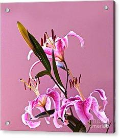 Stargazer Lilies Square Frame Acrylic Print