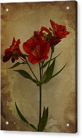 Stargazers On Paper Acrylic Print by Marco Oliveira