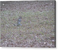 Staring Squirrel Acrylic Print by Rickey Rivers Jr